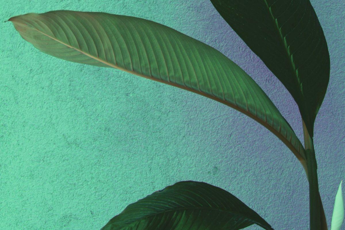 Kunstplanten zijn ook ideaal voor in de tuin