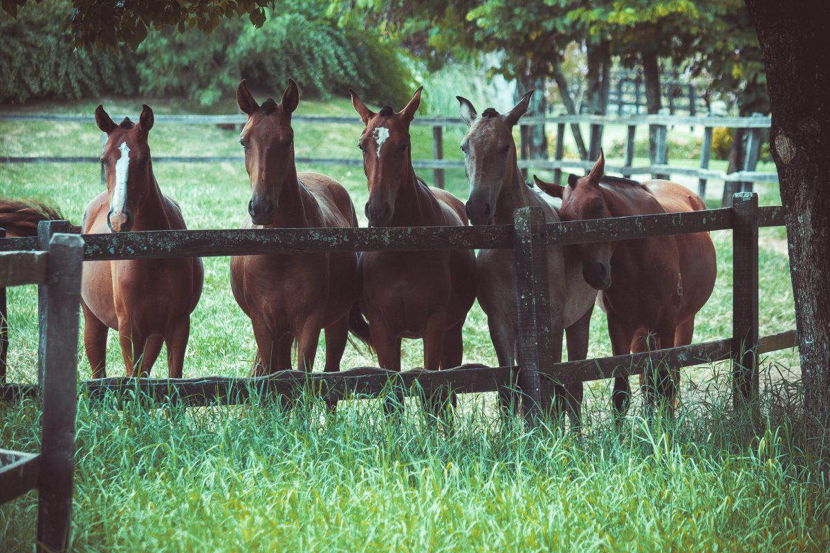 Soorten omheiningen voor paarden
